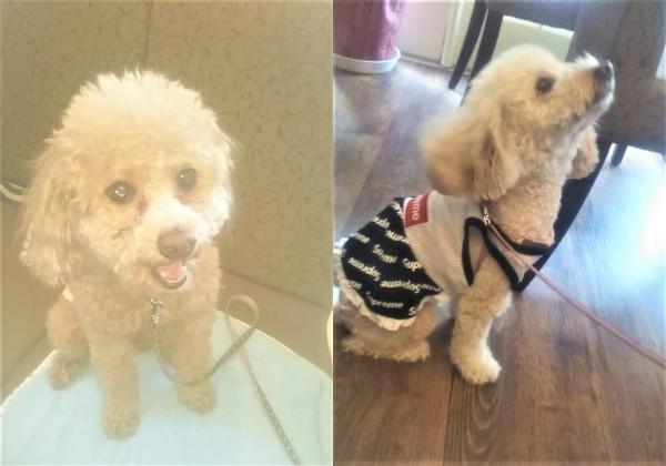 イベント開催報告 マリッサとくしま主催♪♪『【30代限定】マリッサとくしま×カフェダイニング「806」犬好きコン』